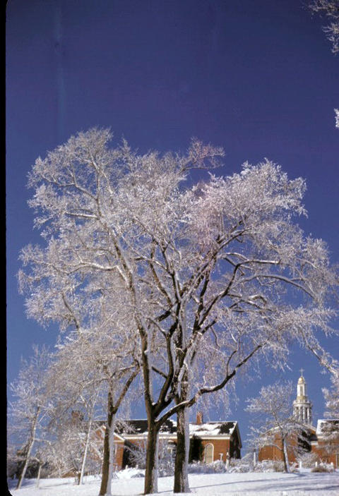 Snow on trees behind campus - 1949